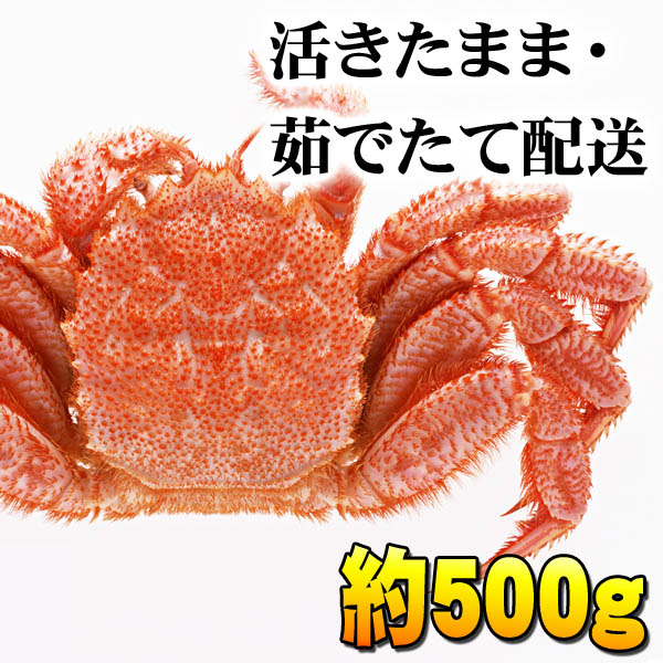 活毛ガニ 中型