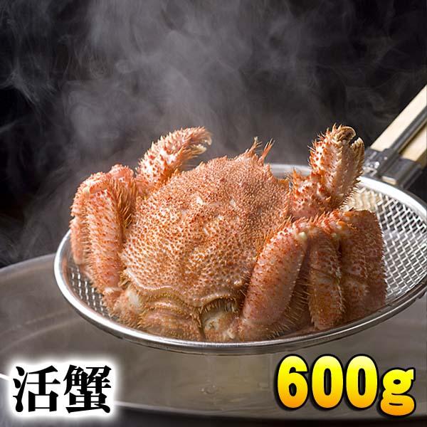 活毛蟹 大型