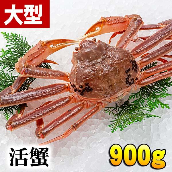 活ズワイ蟹