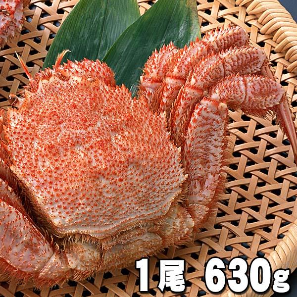 大型の毛蟹 オホーツク産