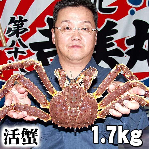 活タラバガニ オス 1.7kg前後 小型サイズ 活けたらばがに